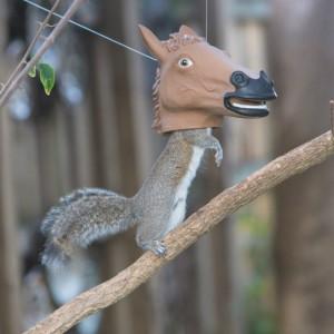 Mangeoire tête de cheval pour écureuils