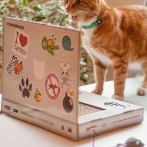 Griffoir pour chat - PC portable