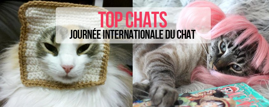 Chat gratuit nevers