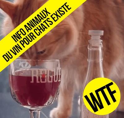 L'invention tant attendue le vin pour chat